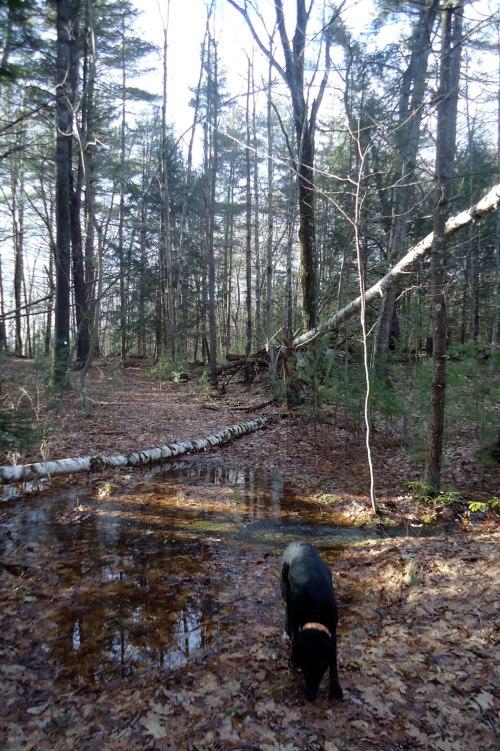 trail-melt